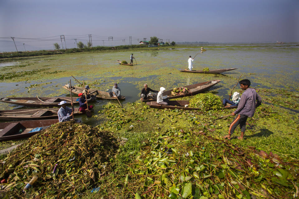 Kashmiri boatmen employed by the Lakes and Waterways Development Authority remove weeds from the Dal Lake in Srinagar, Indian controlled Kashmir, Tuesday, Sept. 14, 2021. Weeds, silt and untreated sewage are increasingly choking the sprawling scenic lake, which dominates the city and draws tens of thousands of tourists each year. (AP Photo/Mukhtar Khan)