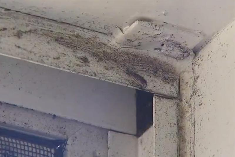 Manly West mould infestation: Mould outbreak forces family from ...