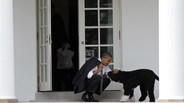 FILE - In this March 15, 2012 file photo, President Barack Obama pets the family dog Bo, a Portuguese water dog, outside the Oval Office of the White House in Washington. Former President Barack Obama's dog, Bo, died Saturday, May 8, 2021, after a battle with cancer, the Obamas said on social media. (AP Photo/Pablo Martinez Monsivais, File)