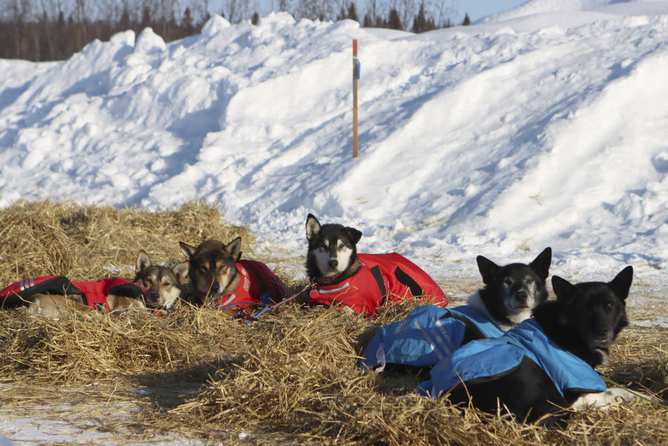Christopher Parker's dogs rest in the McGrath, Alaska, checkpoint during the Iditarod Trail Sled Dog Race on Saturday, March 13, 2021. Parker scratched earlier in the race. (Zachariah Hughes/Anchorage Daily News via AP, Pool)