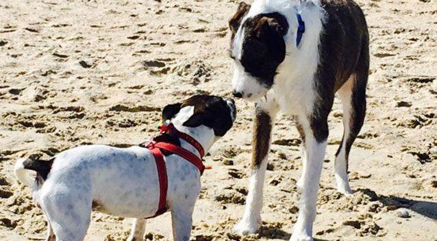 Neil McMahon said his dog Maudie (left) licked a baby at an off-leash dog beach and he was fined for not maintaining