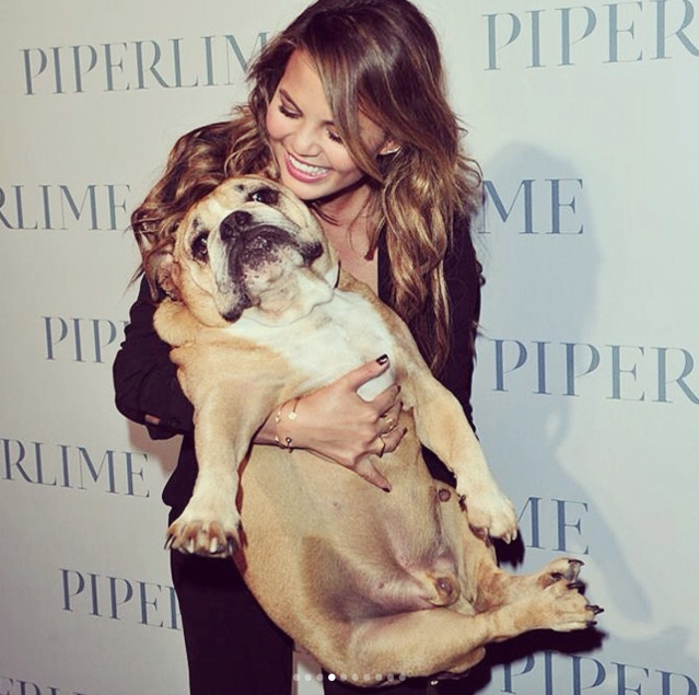"Chrissy Teigen's dog Puddy passed away, and the star says her ""heart aches."" (Photo: Instagram/Chrissy Teigen)"