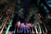 <p>Trees are illuminated during the launch of the Enchanted Christmas attraction at Westonbirt Arboretum near Tetbury. (PA) </p>
