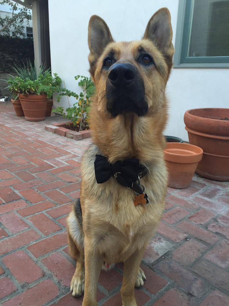 Ace from Manhattan Beach, Calif., looking dapper as ever in his finest formal wear.