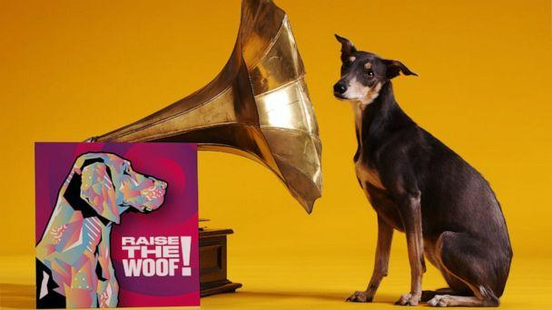 PHOTO: The track – Raise the Woof! - was released on Nov. 18, 2020 and created based on scientific research and input from vets & animal behaviorists to make dogs feel happy and content, according to Tails.com. (Tails.com)