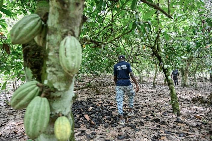 An Ivorian police officer walks in search of children working in cocoa plantations