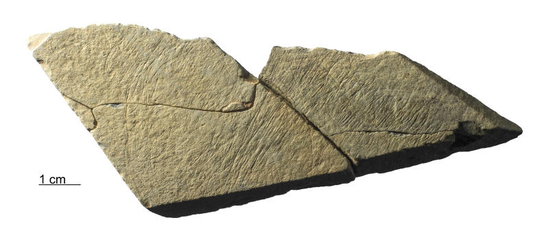 Stone fragments found at the found at the Les Varines archaeological site in the south east of Jersey