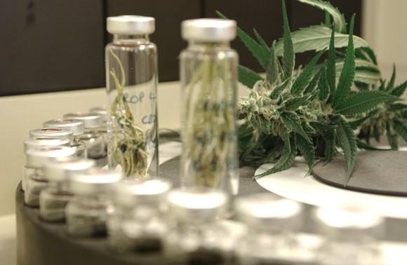Cannabis leaves next to test tubes and other biotech lab equipment.