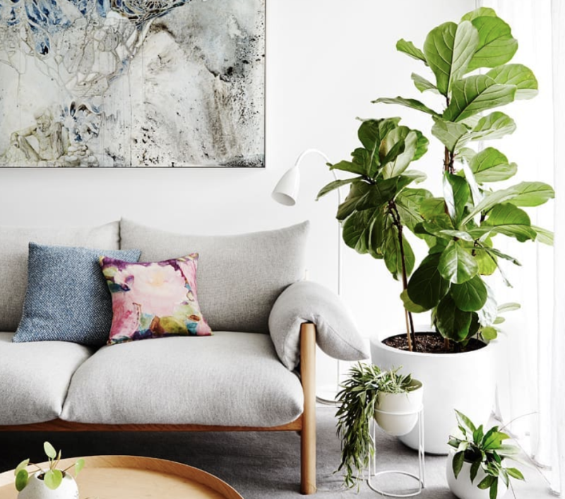 buy fiddle leaf fig online see it in augmented reality 2019