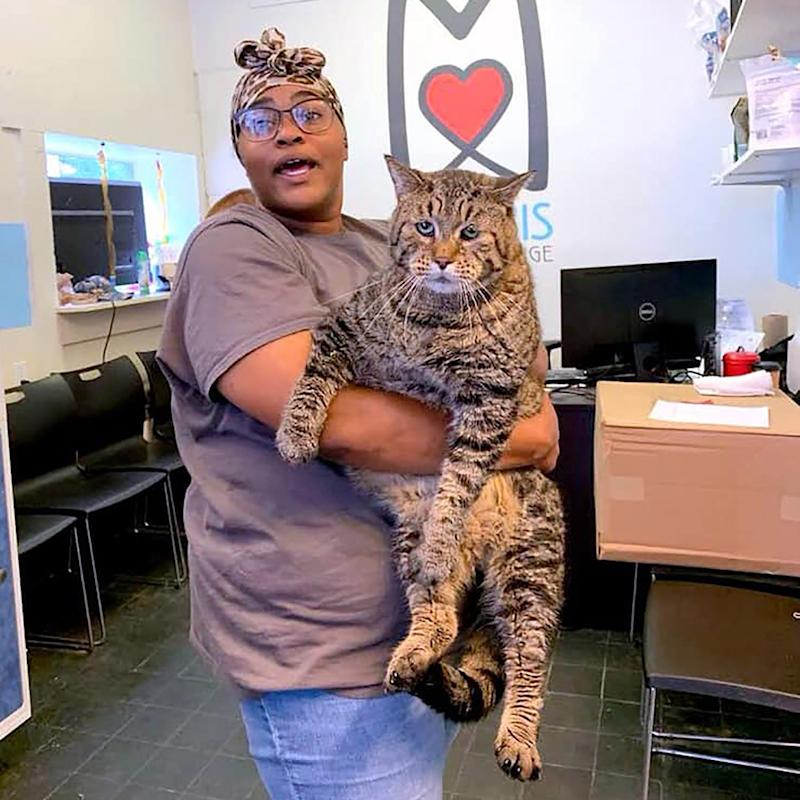 26-Pound Shelter Cat Named Mr. B Breaks Hearts and the Internet: 'He's a Chonk of a Chonk'
