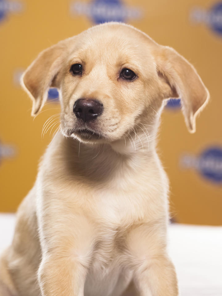 Name: Chestnut