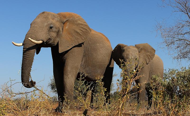 With Elephant Rifles Set to Roar, Photo Safaris to Get Own Space