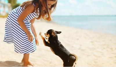 In celebration of National Pet Month, Miami Beach is giving pet lovers the inside scoop on the best places to see and be seen with any set of paws, not just during the month of May, but all year long.