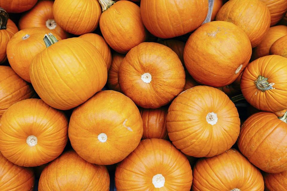 """<p>Started in 1973, <a href=""""https://www.bishopspumpkinfarm.com/"""" rel=""""nofollow noopener"""" target=""""_blank"""" data-ylk=""""slk:Bishop's Pumpkin Farm"""" class=""""link rapid-noclick-resp"""">Bishop's Pumpkin Farm</a> is a working farm offering a ton of family-friendly activities come fall. From the largest U-pick pumpkin farm in the U.S. to a petting zoo and zip line, this Wheatland, California, farm has plenty of activities to keep your family outdoors and smiling.</p><p><a class=""""link rapid-noclick-resp"""" href=""""https://go.redirectingat.com?id=74968X1596630&url=https%3A%2F%2Fwww.tripadvisor.com%2FTourism-g33265-Wheatland_California-Vacations.html&sref=https%3A%2F%2Fwww.countryliving.com%2Flife%2Ftravel%2Fg21273436%2Fpumpkin-farms-near-me%2F"""" rel=""""nofollow noopener"""" target=""""_blank"""" data-ylk=""""slk:PLAN YOUR TRIP"""">PLAN YOUR TRIP</a></p>"""