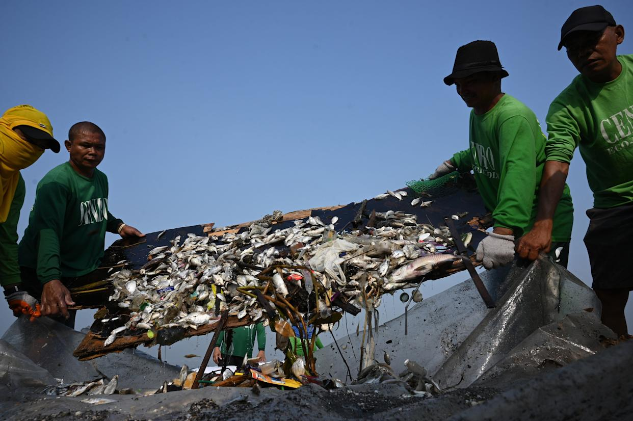 The Philippines already has an unmanageable waste and pollution problem. Here, workers collect thousands of dead fish in Manila Bay, one of the most polluted waterways in the country. (Photo: TED ALJIBE via Getty Images)