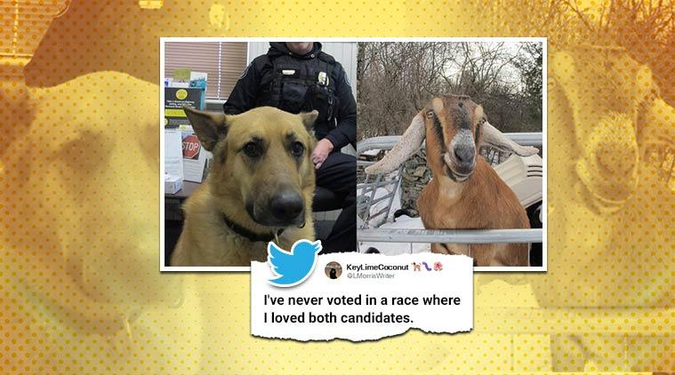 Goat and Dog rum for honorary mayor, Goat and Dog honorary mayor candidates, Vermont, Trending, Indian Express news.