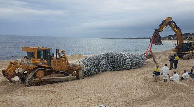 The carcass has been wrapped up and is ready to be moved. Source: Hopetoun Progress Association