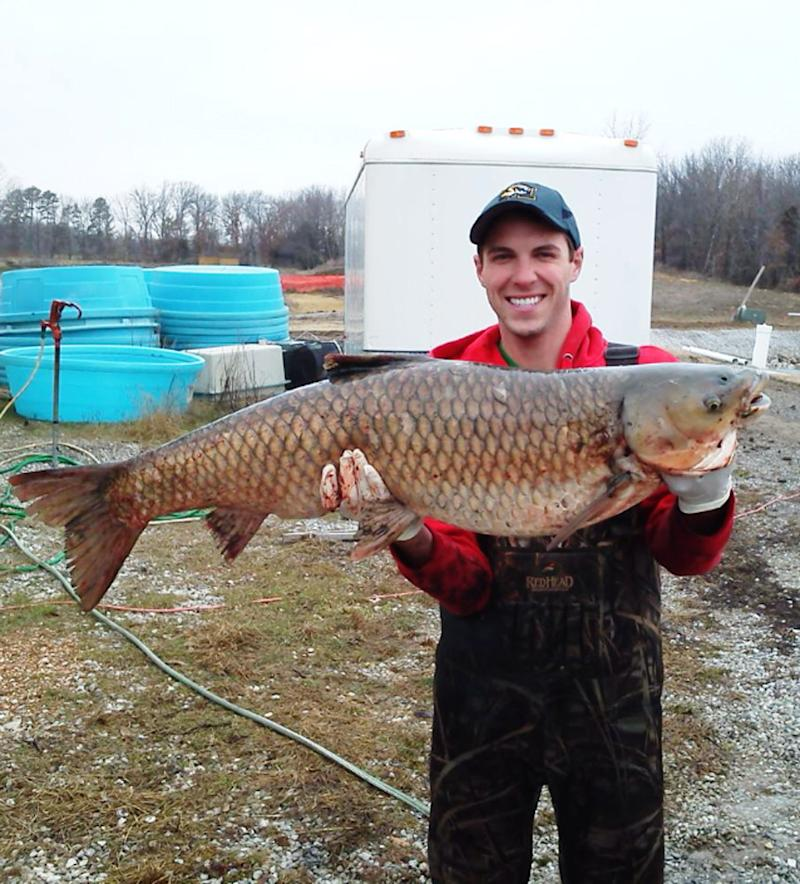 Asian carp reproduce in Great Lakes watershed