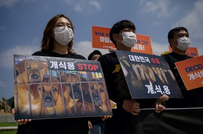 Anti-dog meat protests have grown in South Korea as more people embrace canine companionship in the country (AFP/Ed JONES)