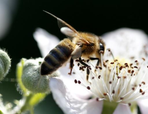 1.4 bn jobs 'depend on pollinators'
