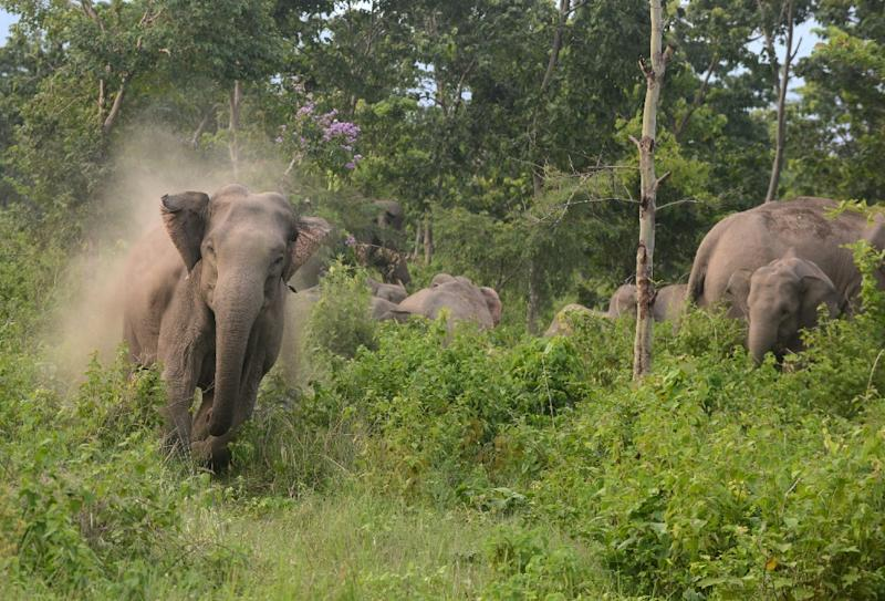 Human-elephant conflicts are on the rise in India as villagers and farmers encroach on the elephants' natural habitat