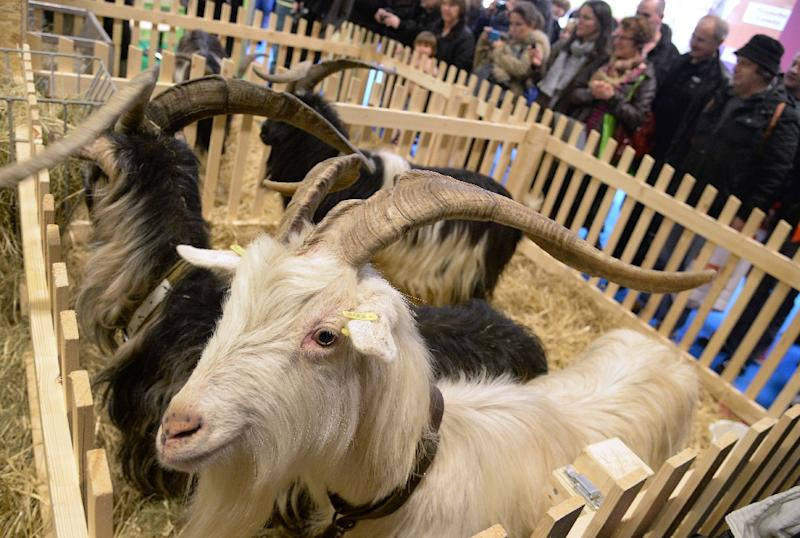 Charlatan doctor Brinkley transplanted billy goats testicles into men to lift their libido (AFP Photo/Pierre Andrieu)