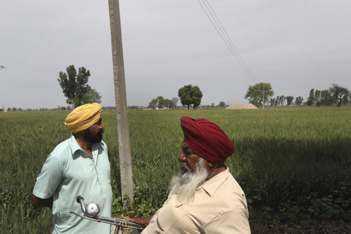 Indian farmers Kartar Singh, 62, left, and mahinder Singh, 72, inspect their crop in Moga district of Indian state of Punjab, Saturday, March 13, 2021. The residents of Ransih Kalan village, have begun taking steps to conserve water. Villagers have installed a sewage treatment plant, and the treated water is then used for irrigation. They've also set up plants to harvest rainwater, which is then diverted into a man-made lake. (AP Photo/Manish Swarup)