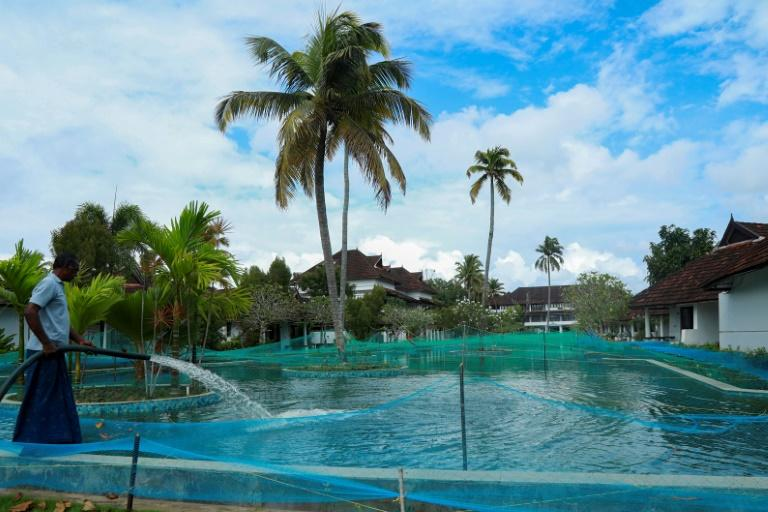 Virus-hit Indian resort turns pool into fish farm