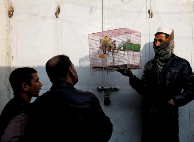 <p>Afghan men look at birds in a cage at Ka Faroshi bird market in Kabul, Afghanistan, Jan. 18, 2018. (Photo: Mohammad Ismail/Reuters) </p>