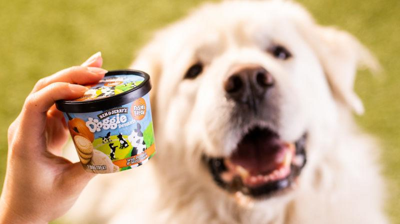 carton of Doggie Desserts in front of a large fawn dog [Image provided by Ben & Jerry's]