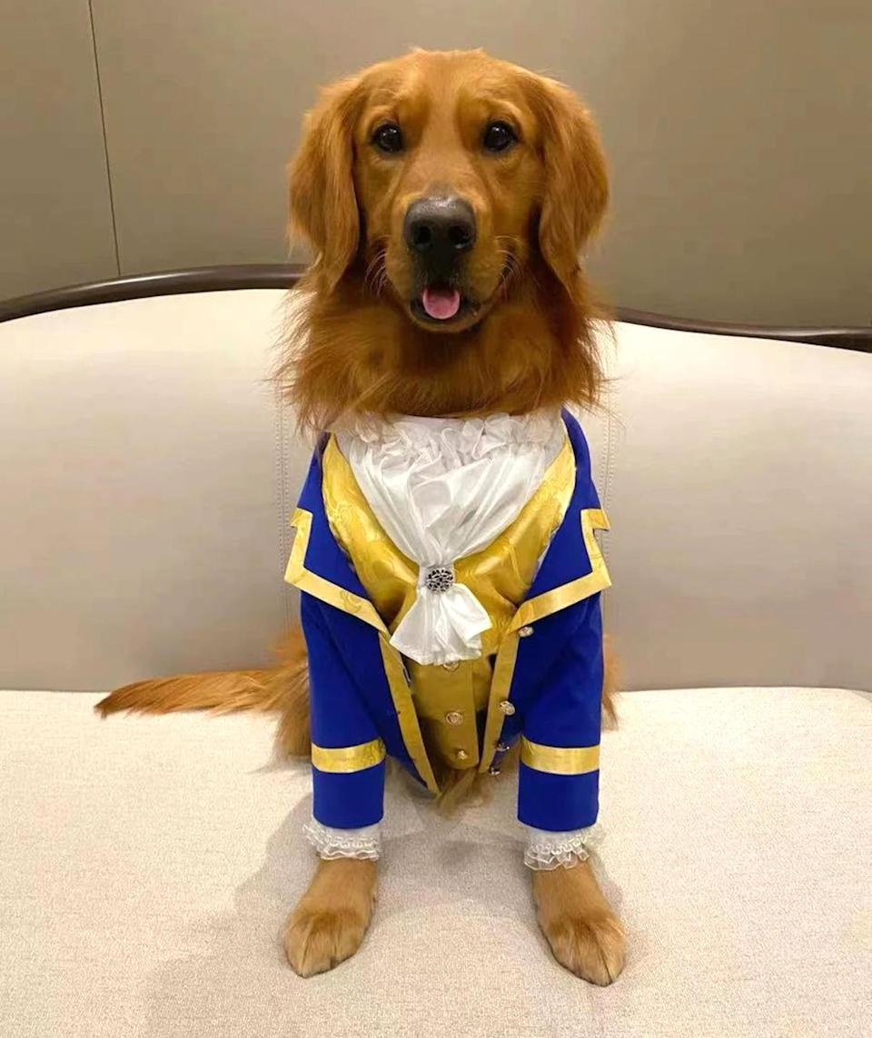 """<p>This canine Beast costume is a beauty! </p> <p><strong>Buy it! </strong>The Beauty And The Beast Dog Costume, $89.99; <a href=""""https://www.awin1.com/cread.php?awinmid=6220&awinaffid=272513&clickref=PEO25HalloweenCostumesforDogsthatWillHaveTrickorTreatersHowlingwithJoykbender1271PetGal12909733202109I&p=https%3A%2F%2Fwww.etsy.com%2Flisting%2F1020420411%2Fdog-cat-pet-costume-for-the-beauty-and"""" rel=""""sponsored noopener"""" target=""""_blank"""" data-ylk=""""slk:Etsy.com"""" class=""""link rapid-noclick-resp"""">Etsy.com</a></p>"""