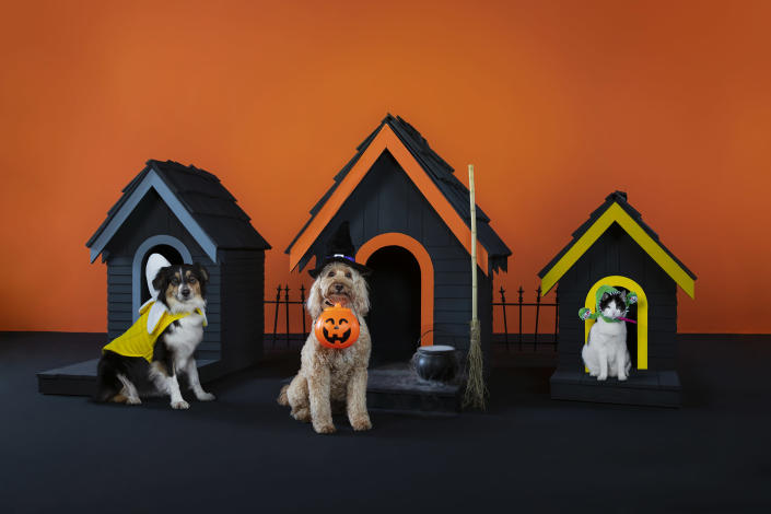 Whether pet parents are looking for cute or spooky costumes, PetSmart offers pets of all sizes and personalities the chance to join in on the Halloween fun.