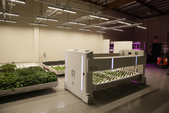 In this Thursday, Sept. 27, 2018, photo the mover robot called Angus transports plants being grown at Iron Ox, a robotic indoor farm, in San Carlos, Calif. At the indoor farm, robot farmers that roll maneuver through a suburban warehouse tending to rows of leafy, colorful vegetables that will soon be filling salad bowls in restaurants and eventually may be in supermarket produce aisles, too. (AP Photo/Eric Risberg)