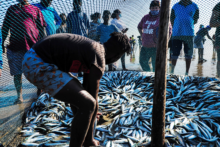 A fisherman with loads of sardines under a net in Durban, South Africa - Saturday 26 June 2021