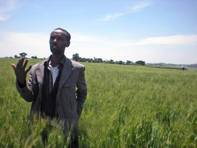 In this photo taken on Wednesday, Oct. 10, 2012 farmer Bedlu Mamo, stands in the middle of a field, on his half hectare wheat farm near Debre Zeit, in Ethiopia's Amhara region. Bedlu says it is the first time he planted the Mangudo variety durum wheat on the farm. The U.N.'s Food and Agricultural Organization is marking World Food Day on Tuesday Oct. 16, 2012, a day dedicated to highlighting the importance of global food security. The FAO said hunger is declining in Asia and Latin America but is rising in Africa. One in eight people around the world goes to bed hungry every night. The International Maize and Wheat Improvement Center says that although maize has long been considered the most important cereal crop in sub-Saharan Africa, demand for wheat is growing faster than for any other food crop. (AP Photo/Kirubel Tadesse Ayetenfisu)