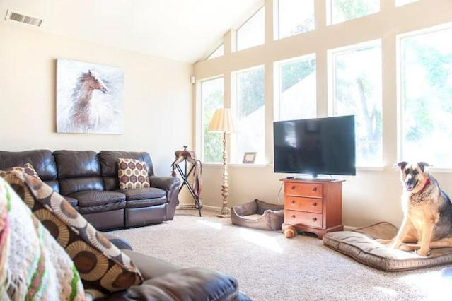 <p>For $126 a night, you can stay on this farm where over 50 animals are cared for — including this cute pup. (Airbnb) </p>