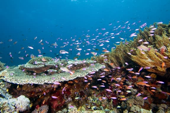 'Coral Corridors' Sheltered Fish from Climate Change