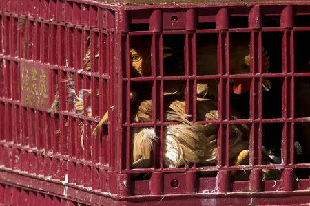 Chickens look out from a cage at a wholesale poultry market in Hong Kong