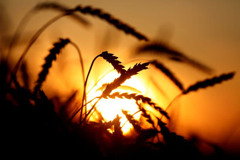 Russia's second-quarter grain export quota depleted as traders secure upcoming supplies