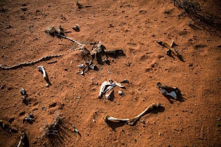 The bones of an animal lie on the ground of the Thuru Lodge game farm near Groblershoop, South Africa (AFP Photo/Guillem Sartorio)