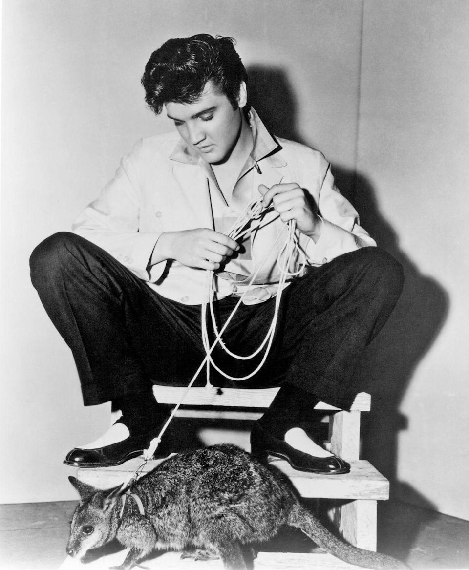 """<p>Elvis Presley had quite the menagerie of animals at his Memphis estate, Graceland. From chickens and donkeys to peacocks and a turkey, Elvis was constantly taking in new animals, but none more exotic than <a href=""""https://www.graceland.com/blog/posts/animal-instinct-elvis-presleys-pets"""" rel=""""nofollow noopener"""" target=""""_blank"""" data-ylk=""""slk:his wallaby"""" class=""""link rapid-noclick-resp"""">his wallaby</a>. The animal was gifted to him by an Australian fan when he was shooting the music video for """"Jailhouse Rock,"""" but the singer eventually <a href=""""https://www.graceland.com/blog/posts/animal-instinct-elvis-presleys-pets"""" rel=""""nofollow noopener"""" target=""""_blank"""" data-ylk=""""slk:gave the pet to the Memphis Zoo"""" class=""""link rapid-noclick-resp"""">gave the pet to the Memphis Zoo</a>. </p>"""