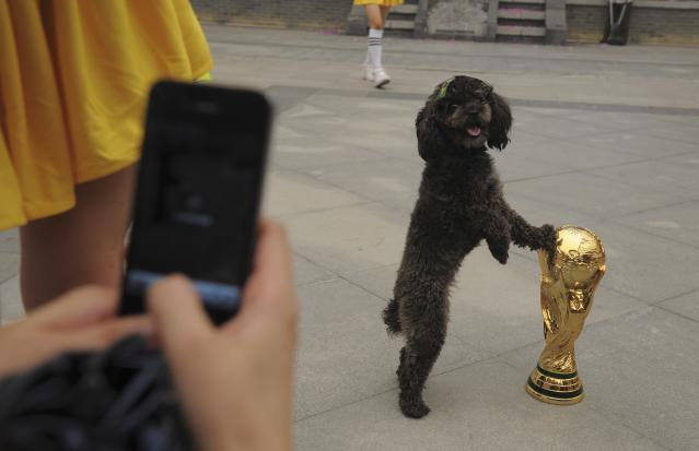 A dog with a Brazilian flag sticker on its head, touches a replica of the World Cup trophy as a visitor takes pictures during an event to celebrate the upcoming 2014 World Cup in Brazil, in Wuhan, Hubei province, June 12, 2014. REUTERS/Stringer (CHINA - Tags: SPORT SOCCER WORLD CUP ANIMALS SOCIETY) CHINA OUT. NO COMMERCIAL OR EDITORIAL SALES IN CHINA
