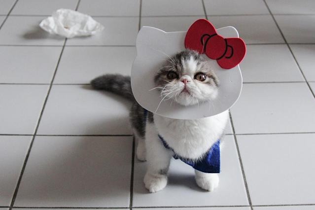 <p>Snoopy looks up to his human as she takes a picture of him in his homemade outfit. (Photo: DailySnoopy/Caters News) </p>