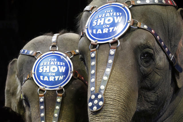 """<p>Elephants Bonnie, left, and Kelly Ann stand during media availability before a performance of the Ringling Bros. and Barnum & Bailey Circus, March 19, 2015 in Washington. After 146 years, the curtain is coming down on """"The Greatest Show on Earth."""" The owner of the Ringling Bros. and Barnum & Bailey Circus told The Associated Press that the show will close forever in May. (AP Photo/Alex Brandon) </p>"""