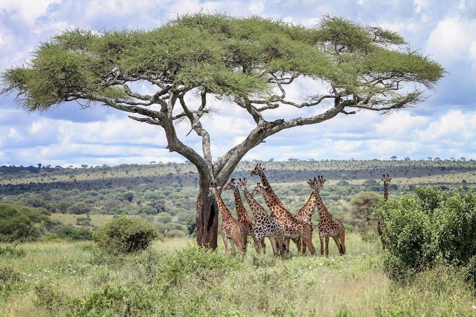 """<p><a href=""""https://www.maasaimara.com/"""" rel=""""nofollow noopener"""" target=""""_blank"""" data-ylk=""""slk:Maasai Mara National Reserve"""" class=""""link rapid-noclick-resp"""">Maasai Mara National Reserve</a> stands out as an epic campsite where, not only can you sleep under the stars in one of Africa's greatest wildlife preserves, but you can also get the chance to spot the Big Five (elephants, lions, leopards, buffalo, and rhinos). There are luxurious camping tents, bush camps, safaris, sky diving, hot air balloon rides, white sand beaches, and so much more. </p>"""