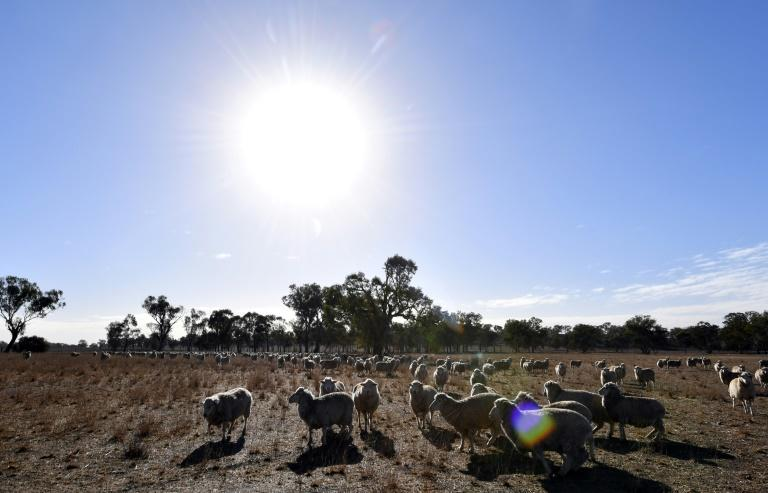 Eastern Australia has been hit by a crippling drought that has forced graziers to hand-feed their stock, sell them or even shoot them dead to stay afloat