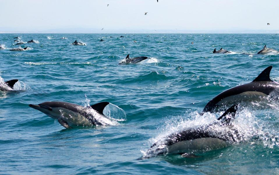 Skim across the waves on a RIB boat to discover the Algarve's rich marine life