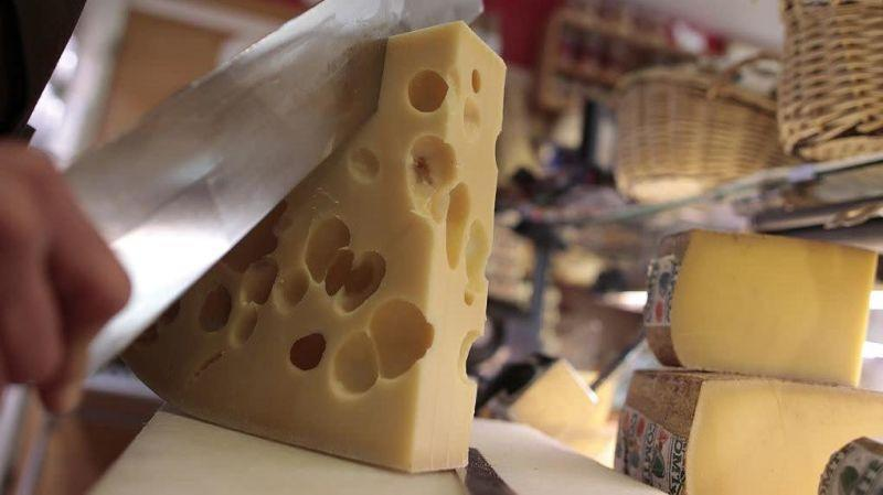 Person cutting into large slab of Swiss cheese