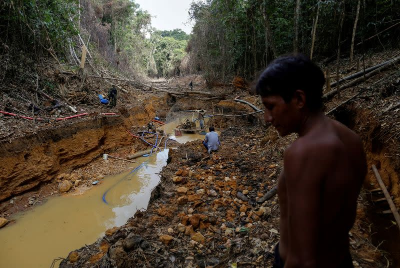 Amazon gold rush: illegal mining threatens Brazil's last major isolated tribe