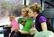 <p>They weren't afraid to match their sweaters to their dogs' sweaters as well.</p>
